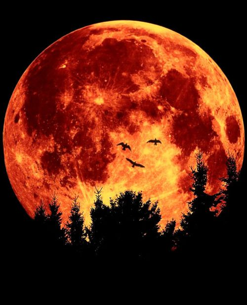 Blood Moon Unleashes the Beast Before Jupiter Venus Conjunction Resurrects the 144000 - Prophecy