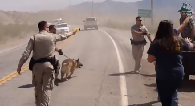 Must See Video! Feds Assault Bundy Ranch Protesters With Tasers And K9 Dogs