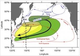 pacific ocean radiation  ... Of Radioactive Cesium