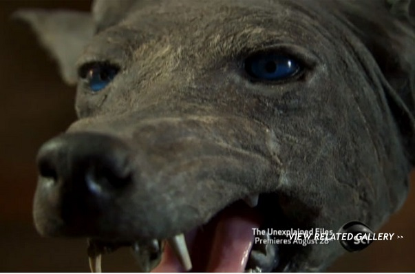 Mysterious Texas 'Blue Dog' Claimed to be Chupacabra | Beyond Science