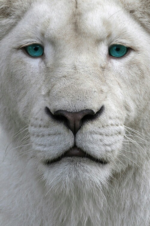 12 photos of rare albino animals strange