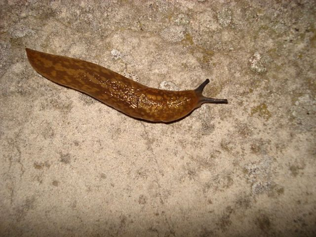Natural ways to keep slugs out of your garden food and farming for How to keep slugs out of garden