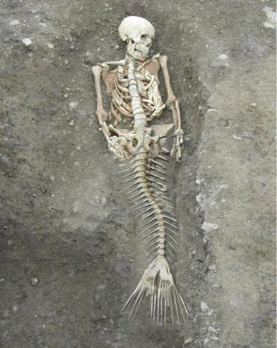 Mermaids Look Look Like a Real Mermaid