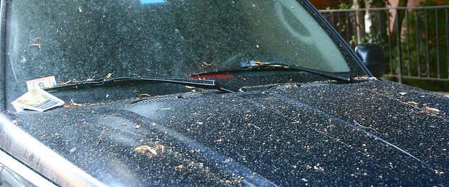 How To Get Tree Sap Off Your Car Paint