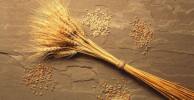 Why 80 Percent Of People Worldwide Will Soon Stop Eating Wheat...Or Die