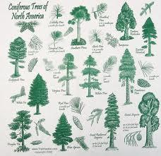 List of Trees and Plants Create A World Wiki FANDOM