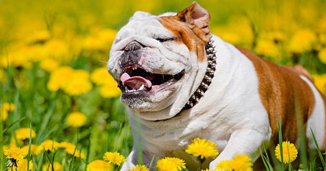 The Ultimate Alternative Remedies Guide Every Dog Parent Should Have (Video)