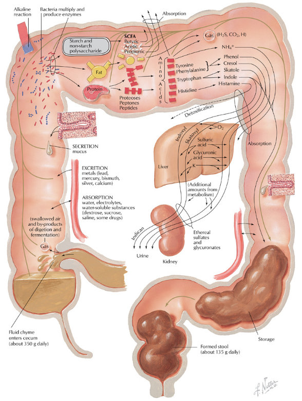 Natural Remedies To Clear Bowel System
