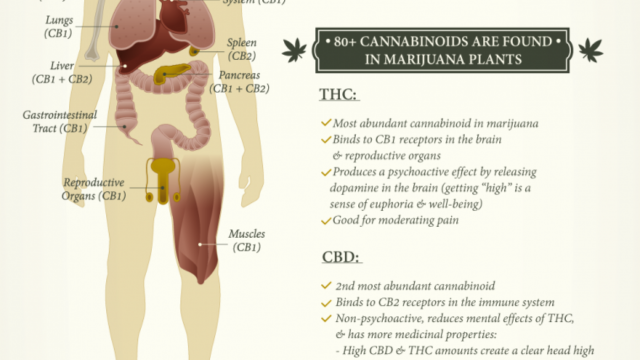 What Cannabis Does to Your Mind & Body Depending on How You Ingest It  (Video)