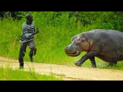 13 Tips on How to Survive Wild Animal Attacks (Video)