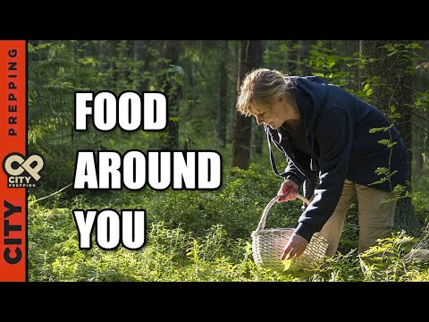 25 Plants You Can Eat in Nature (Foraging for Food)  (Video)