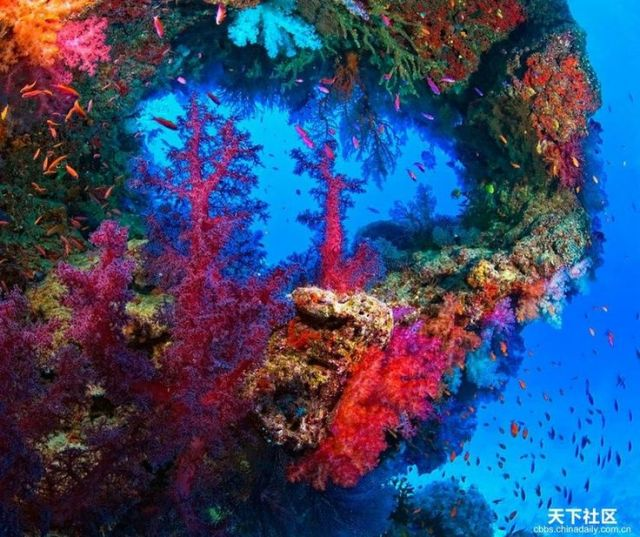 Under the sea beautiful and amazing underwater world for Amazing ocean images