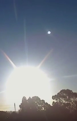 image Nibiru with wings South Australia Mar 15th 2016