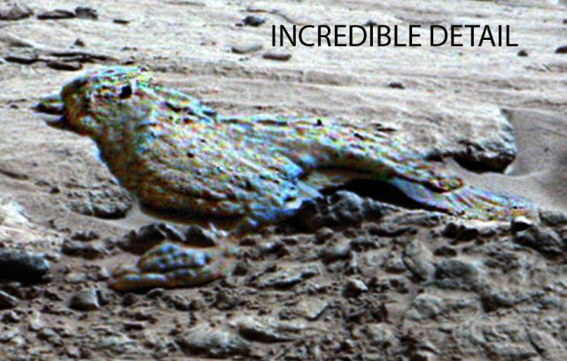 Pterodactyl On MARS!!! For Real?   Space