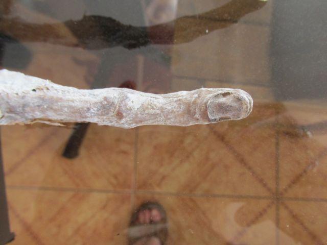 L'incredibile scoperta di una mano aliena ritrovata a Cuzco