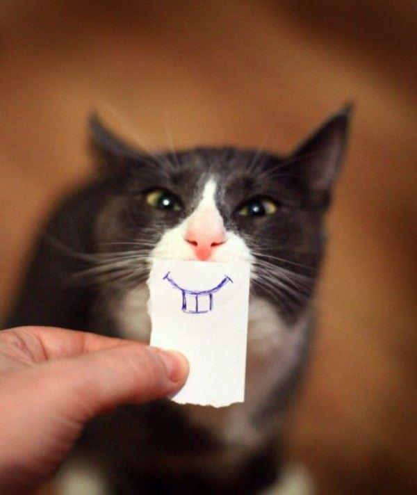 cat-funny-5.jpg
