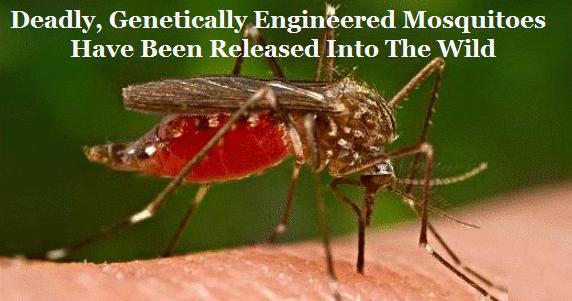 mosquitoes_geneticallyengineered.jpg