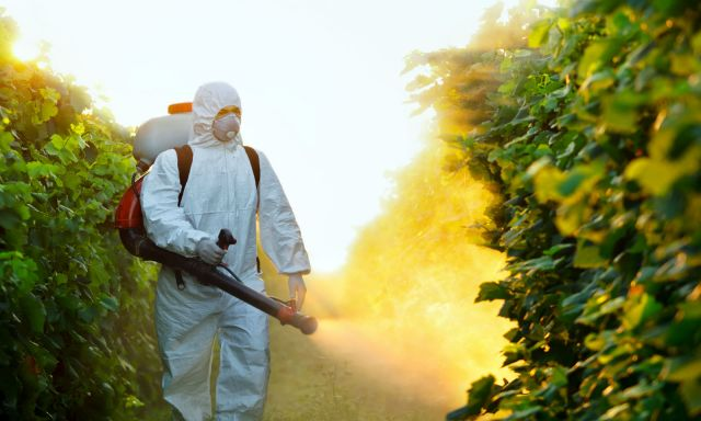 Important questions you must Ask A Pest Control company before hiring