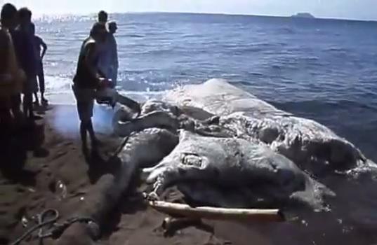 Giant Sea Monst... Giant Sea Monster Skyrim
